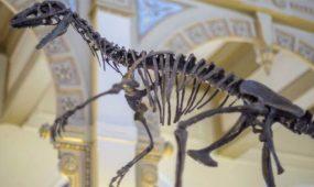 """""""Dinosaurios, más allá de la extinción"""""""